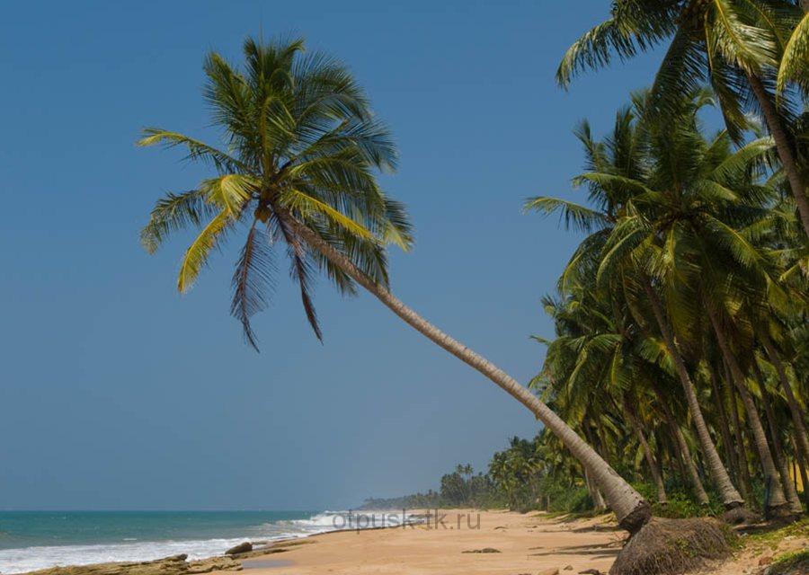 Пляж на Шри Ланке в январе